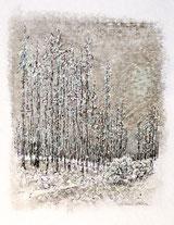 Jungwald im Winter