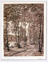Waldweg mit Birken