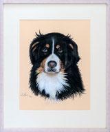 Sennenhund Portrait