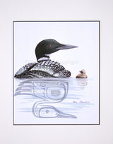Loon with Chicken / Sterntaucher mit Küken
