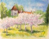 Schlossgarten, blühende Obstbäume