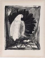 Taube am Nest
