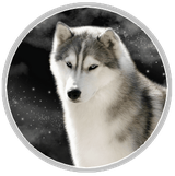 husky siberien caractère loup chien