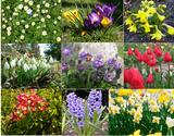 dopasuj podpisy do poszczególnych kwiatów - gra Asi Apanasewicz