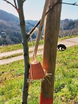 Selbstgemachtes Ohrenkneifer-Versteck hängend an einem Baum