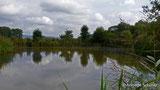 Mehr als nur Amphibienbiotop