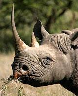 rinoceronte Tsavo Ovest in2kenya safari watamu kenya nairobi malindi