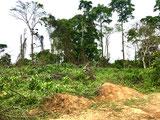 Blu Karb utilise les déchets forestiers pour produire du charbon de bois