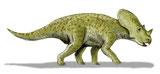 Bild eines Brachyceratops
