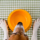 What Nutritionists Feed Their Pets