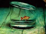 Erfahrungsbericht Ein Fisch und meine Gefühle