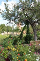 Blühender Obstbaum (Foto: O. Gellißen)