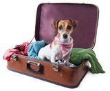 Wohlerzogene Hunde sind in den Ferienwohnungen willkommen!