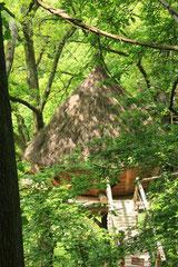la Cabane Cocon