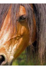 Mieux vivre l'ici et maintenant par la relation avec le cheval.
