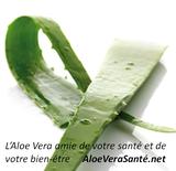 LR ALOE VIA - L'aloe vera - 5000 ans d'expérience médicinale. L'histoire de l'aloe vera est sans précédent.