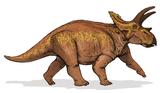 Bild eines Anchiceratops