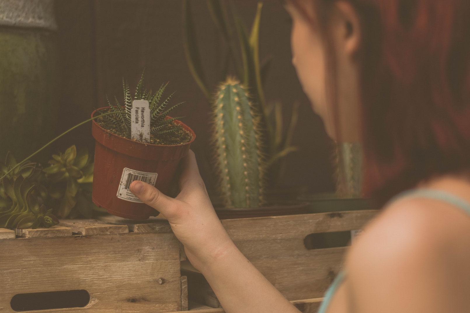 Vermehren von Zimmerpflanzen - Für die Pflege von Zimmerpflanzen, die Anzucht neuer Pflanzen und schließlich für das Vermehren von Zimmerpflanzen benötigst du verschiedenes Zubehör.