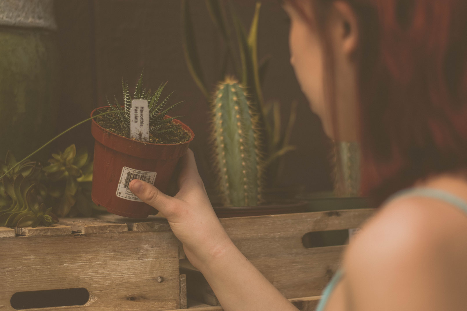 ZIMMERPFLANZEN VERMEHREN - Für die Pflege von Zimmerpflanzen, die Anzucht neuer Pflanzen und schließlich für das Vermehren von Zimmerpflanzen benötigst du verschiedenes Zubehör.