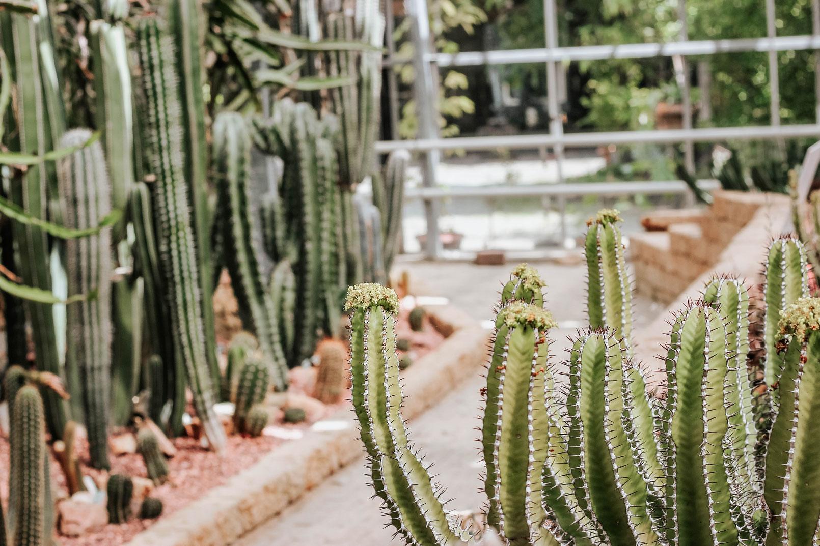 Heizmatten zur Anzucht von Pflanzen - Die Heizmatte von Riogoo verwenden wir selbst und sind absolut begeistert. Wir haben bereits einige ausprobiert und hatten oft das Problem, dass andere Heizmatten zu dick und unflexibel war