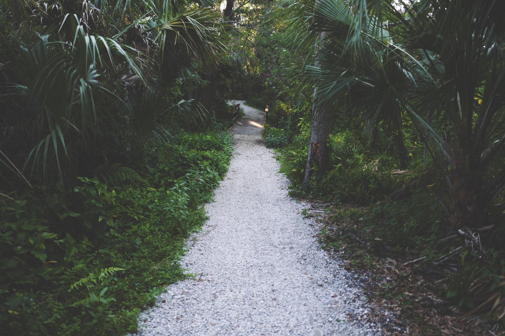 Zimmerpflanzen Dünger - Dünger ist nicht gleich Dünger. Denn so vielfältig wie deine Pflanzen und ihre Bedürfnisse sind, so vielfältig ist auch Zimmerpflanzen Dünger. Es gibt ihn in unterschiedlichen Formen.