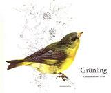 BiHU Vogelführer Natur Hergenrath Völkersberg Grünling