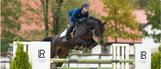 Aloé véra Santé, vitalité pour chevaux