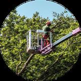 Schiller Gartengestaltung - Garten und Landschaftsbau Cuxhaven - Gewerbekunden - Baumpflege