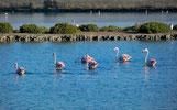Flamingo's vanuit het dakterras Villa Casa del Lago, San Fulgencio, Costa Blanca
