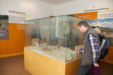 Blick in die Senne-Ausstellung. Foto: Karl-Heinz Niederkrüger