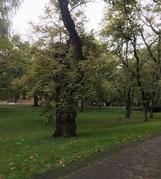 北海道大学構内写真