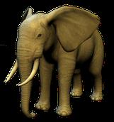 Bild Meine Zoo-Tierarztpraxis 3D