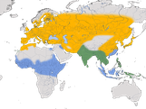 Karte zur Verbreitung des Flussregenpfeifers (Charadrius dubius)
