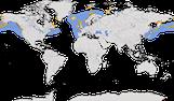 Karte zur Verbreitung der Trottellumme (Uria aalge)