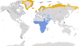 Karte zur Verbreitung des Sandregenpfeifers (Charadrius hiaticula)