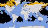 Karte zur Verbreitung der Familie der Raubmöwen (Stercorariidae)