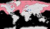 Karte zur Verbreitung der Alkenvögel