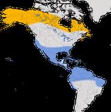 Karte zur Verbreitung des Wiesenstrandläufers (Calidris minutilla)