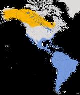 Karte zur Verbreitung des Kleinen Gelbschenkels (Tringa flavipes)
