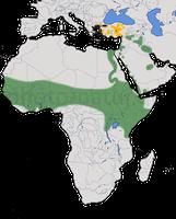 Karte zur Verbreitung des Spornkiebitzes (Vanellus spinosus)