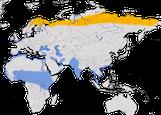 Karte zur Verbreitung des Dunklen Wasserläufers (Tringa erythropus)