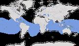 Karte zur weltweiten Verbreitung der Noddi (Anous stolidus).