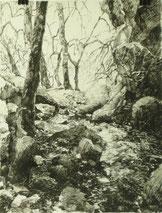 """""""Kleine Quelle"""", Tusche, 40 x 30 cm, 2012"""