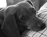 Repérer des troubles du comportement chez le chien