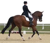 » weiter zu gebrauchte Dressursättel aus dem aktuellen Lucky-Horse Sattelangebot
