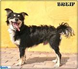 Breif