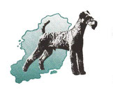 https://foerderverein-irish-terrier.de/