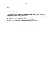 Tafel 6