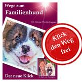 Familienhund Elo Erziehung Welpe