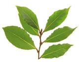 Amberbaum-Blatt